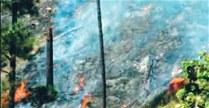 El fuego afectó severamente terrenos en la loma del Pico Francés.  Wilson Aracena