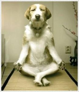 Funny-Dog-Meditating