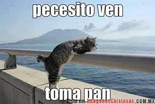 Pececito_ven