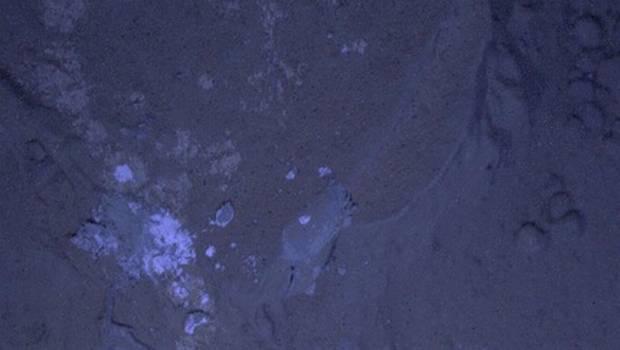 La fotografías buscan hallar minerales fluorescentes en una roca estudiada por el robot.