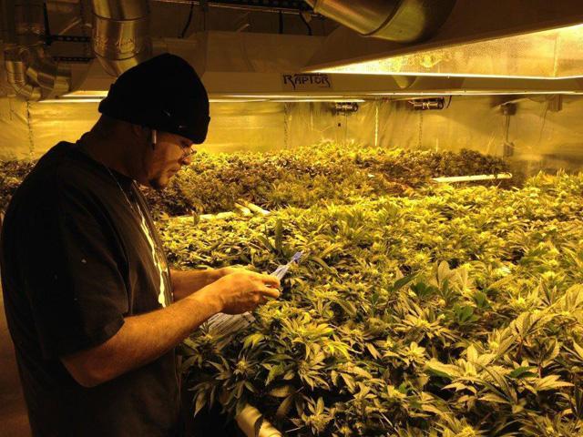 EEUU abre sus primeros ´coffee shops´ para fumar marihuana