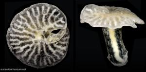 Científicos descubren un animal marino inclasificable