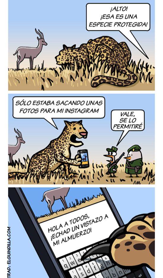 Instagram para animales