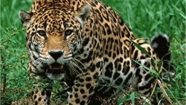 Mujer Vs Leopardo