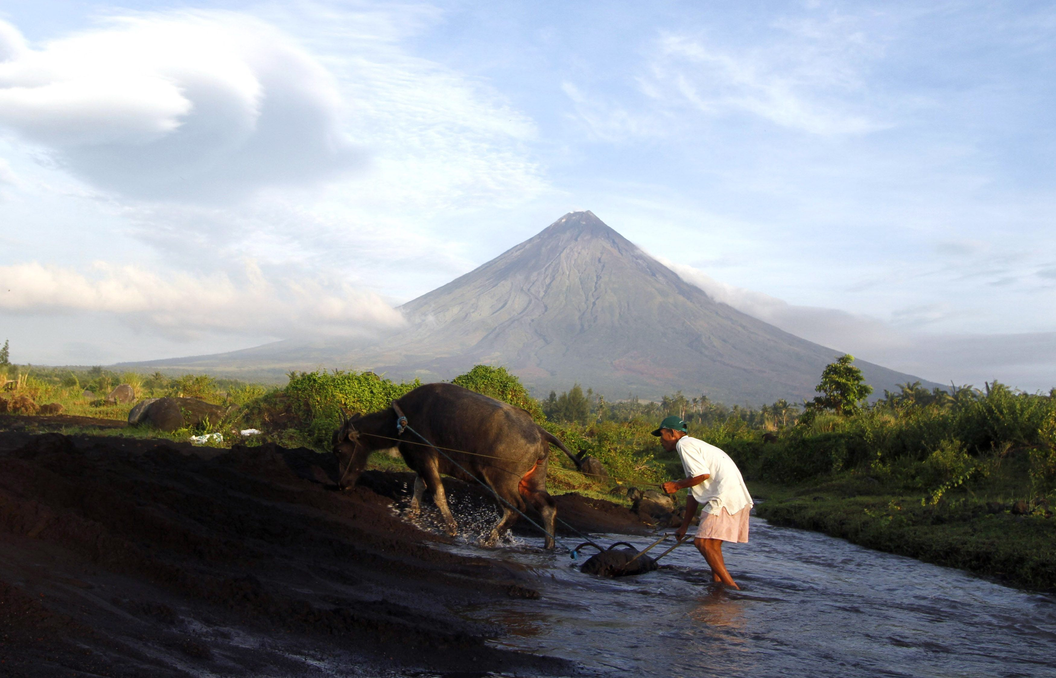 Farmer walks with his buffalo with the Mayon Volcano in the background in Albay province, Bicol region, south of Manila