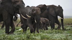 KENYA-ELEPHANTS-POACHING