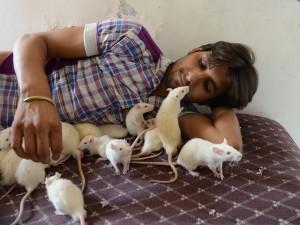 Hace más de un año solo tenía cuatro ratas blancas. Ahora cría a más de cincuenta de ellas.