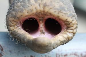 nariz-elefante