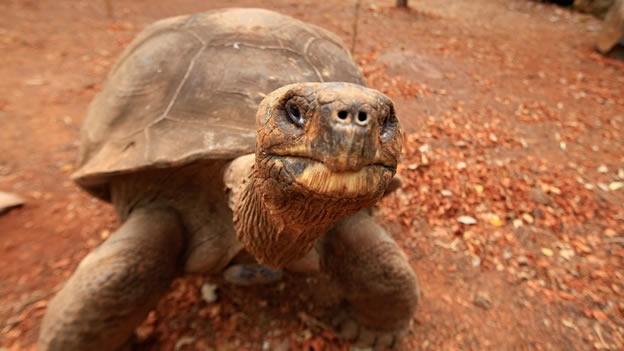 tortuga de 60 años
